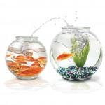 iStock_000001742051 goldfish